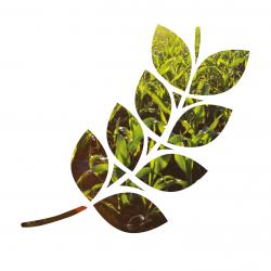financiamiento agricultura ecológica2